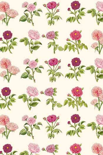 Sajou fabric with The Empress Josephine's roses from the Malmaison Château